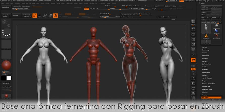 Base anatómica femenina con Rigging para posar en ZBrush